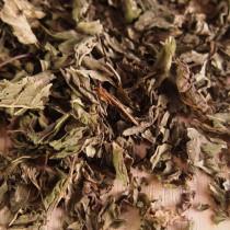 Mint Leaves 1kg